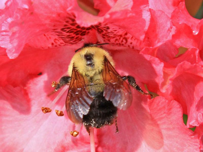Native Pollinator Program