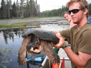 Patrick untangles a 12.0 kg male Snapper from a trap in the km 47 beaver pond - it later bit his finger