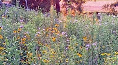 Wildflower Seed Grants Now Available