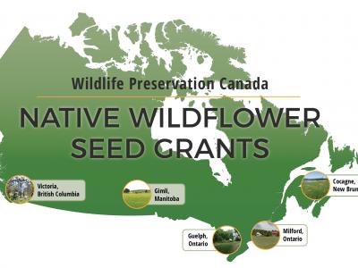 Wildflower Seed Grant Winners