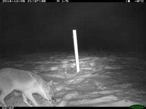 Photo credit and property of Calgary Zoo