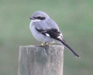 Ontario bird spotted in Virginia!