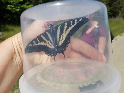 Where for art thou Butterflies?