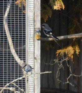 Monet Musings And Motus Monitoring Wildlife Preservation