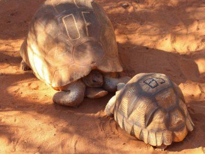 Tortoises Need No Translation