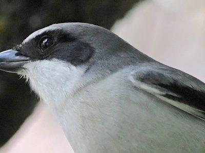 Happy World Migratory Bird Day 2021!