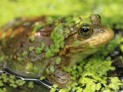 BC heatwave alarms species conservation biologists